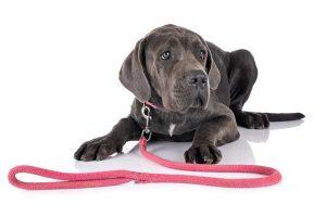 Hund mit einem rosa Hundehalsband.