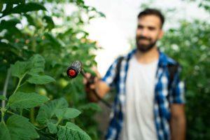 Mann gießt seine Gemüsepflanzen mit einem Wasser-Drucksprühgerät.