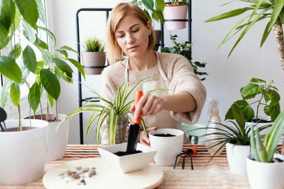 Pflanzenmesser für den Indoor Bereich